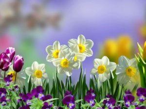 proljetno cvijece 600 450 80 s c1