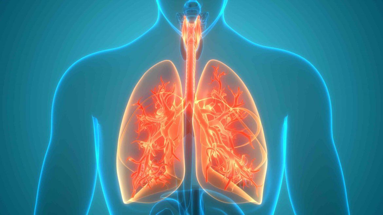 human respiratory system lungs anatomy 1226884277 b922ec7e92054780a6dc2308107f5188