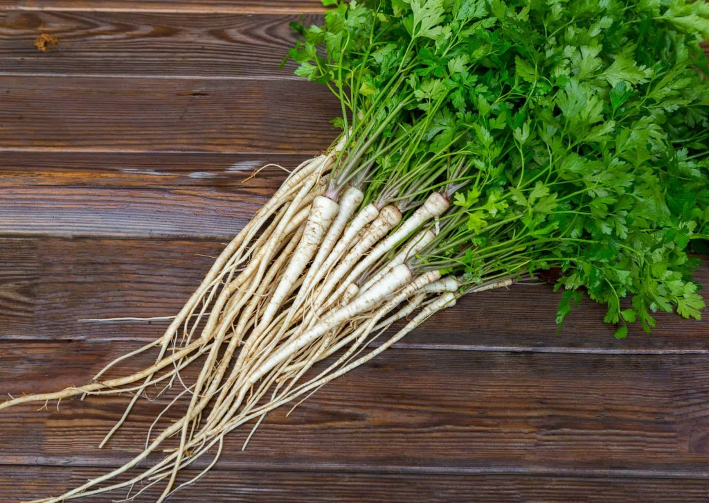 Parsley Root bigstock Parsley Root With Leaves On A 262654507 scaled 1