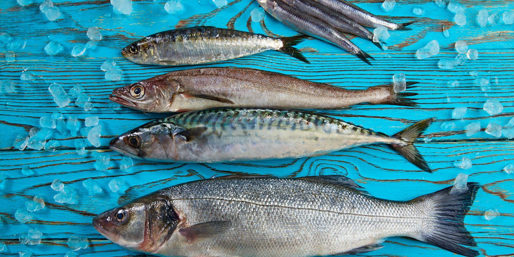 plava riba korisnost