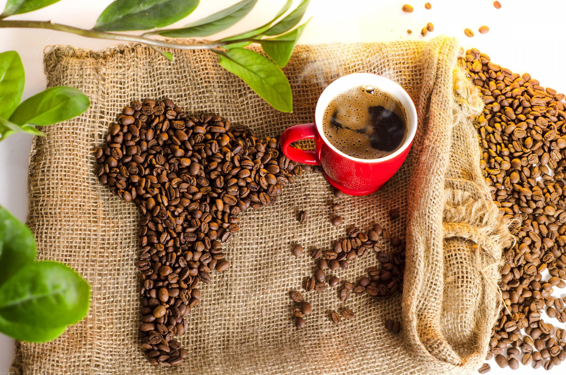 kafa svijet