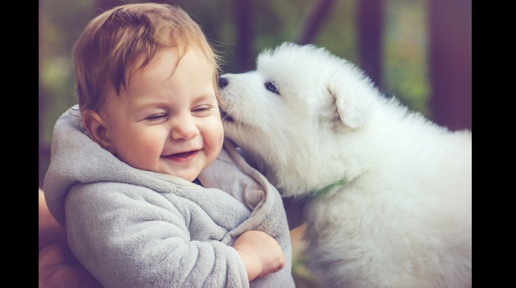 puppy QT 1024x571 1