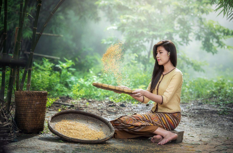 rice 1807554 1920