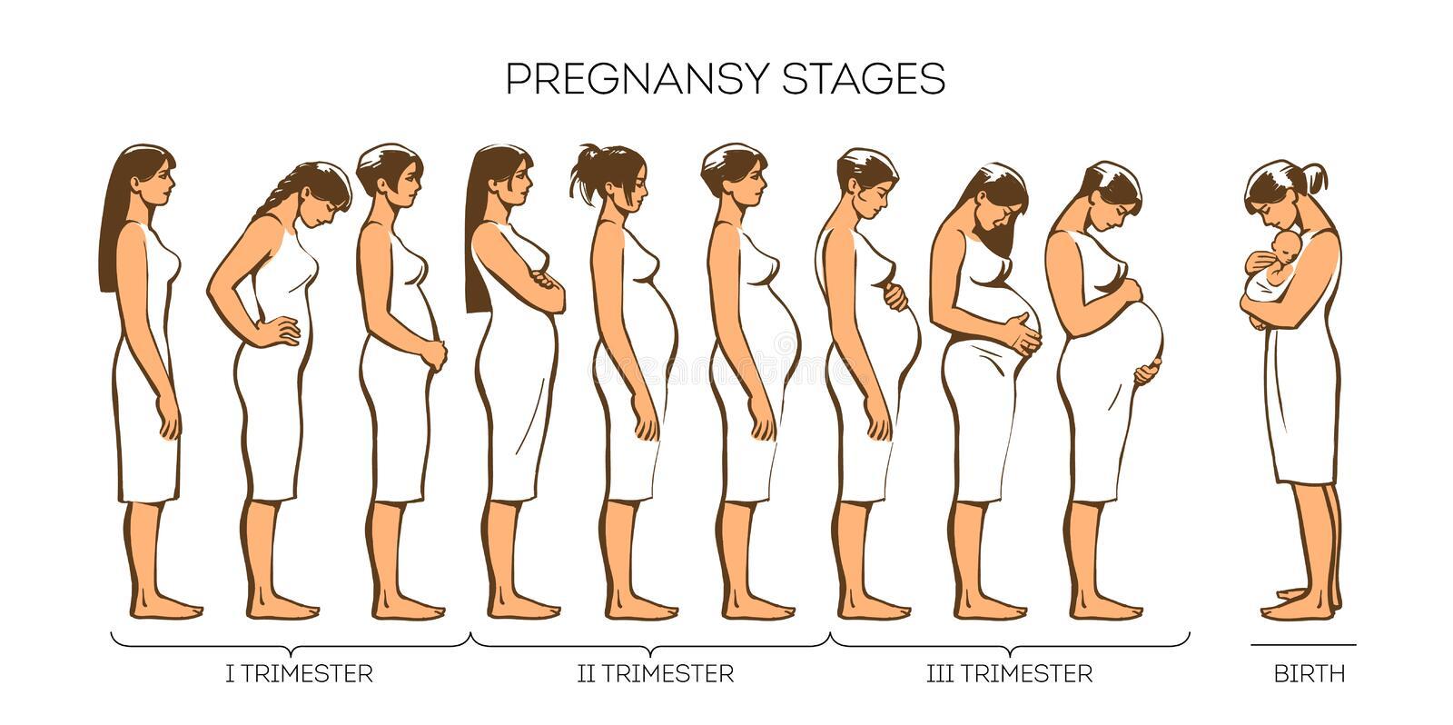 women pregnancy stages vector image pregnant woman motherhood trimester nine months 68849297