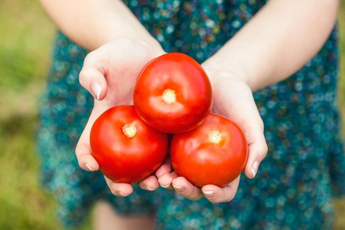 118237 paradajz share